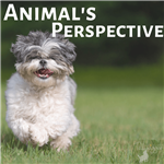 Animal Perspective Theme for Tween Book Club